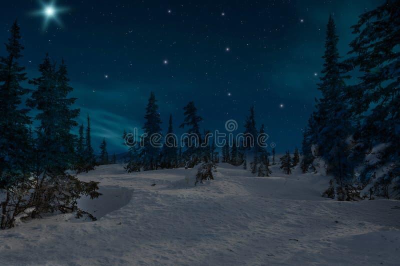 Κομψά δασικά αστέρια χιονιού νύχτας στοκ εικόνα με δικαίωμα ελεύθερης χρήσης