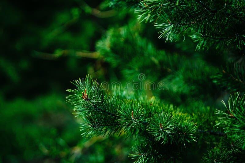 Κομψή φύση στοκ φωτογραφία με δικαίωμα ελεύθερης χρήσης