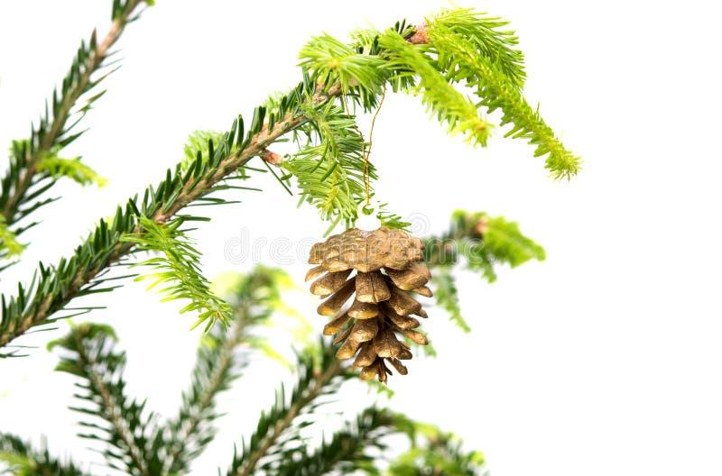 Κομψοί κλάδοι με τις διακοσμήσεις Χριστουγέννων στοκ εικόνες