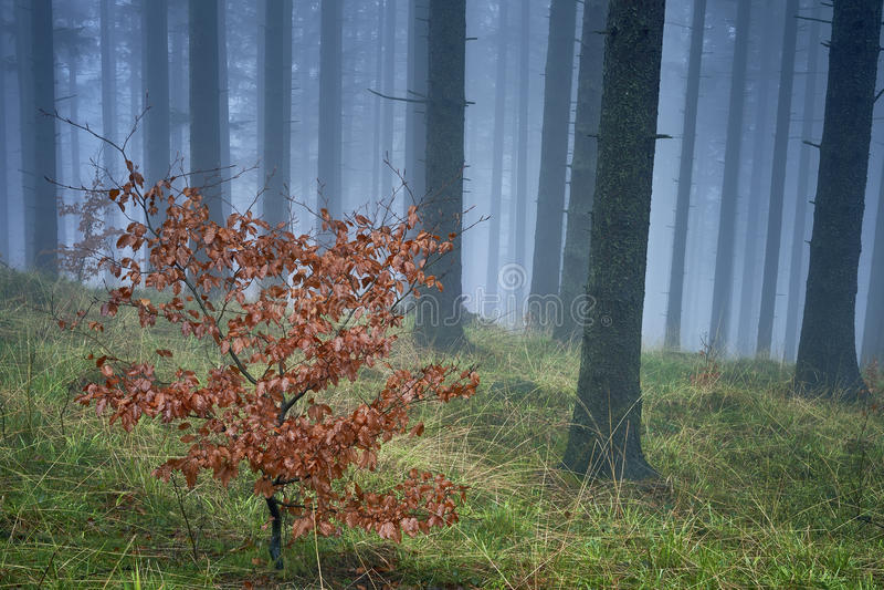 Κομψό δάσος άνοιξη στοκ εικόνα με δικαίωμα ελεύθερης χρήσης