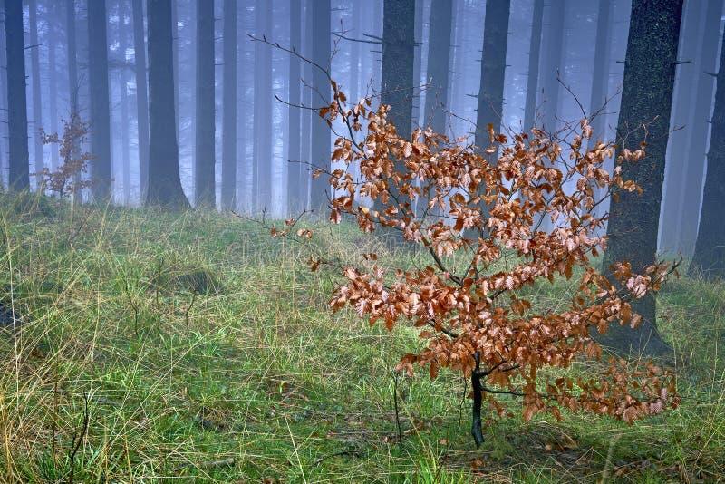 Κομψό δάσος άνοιξη στοκ φωτογραφία με δικαίωμα ελεύθερης χρήσης