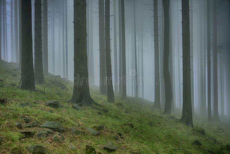 Κομψό δάσος άνοιξη στοκ εικόνες