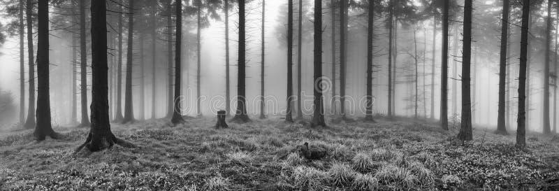 Κομψό δάσος άνοιξη στοκ εικόνες με δικαίωμα ελεύθερης χρήσης