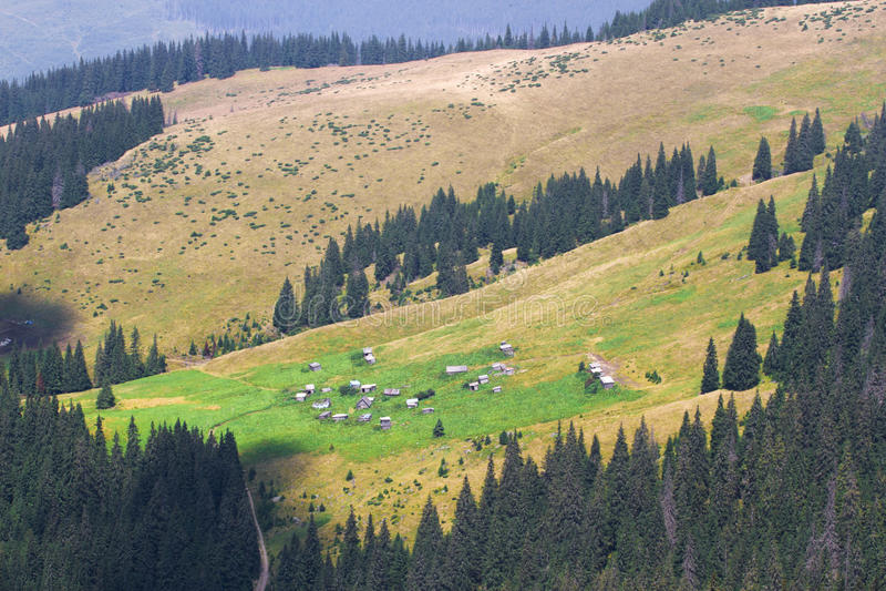 Κομψό δάσος έλατου ουκρανικά Carpathians Βιώσιμο σαφές οικοσύστημα Τέμνον δέντρο, αποδάσωση στοκ φωτογραφία με δικαίωμα ελεύθερης χρήσης
