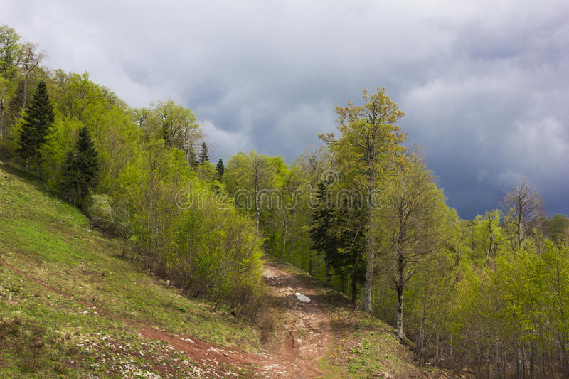 Κομψό δάσος στοκ φωτογραφία με δικαίωμα ελεύθερης χρήσης