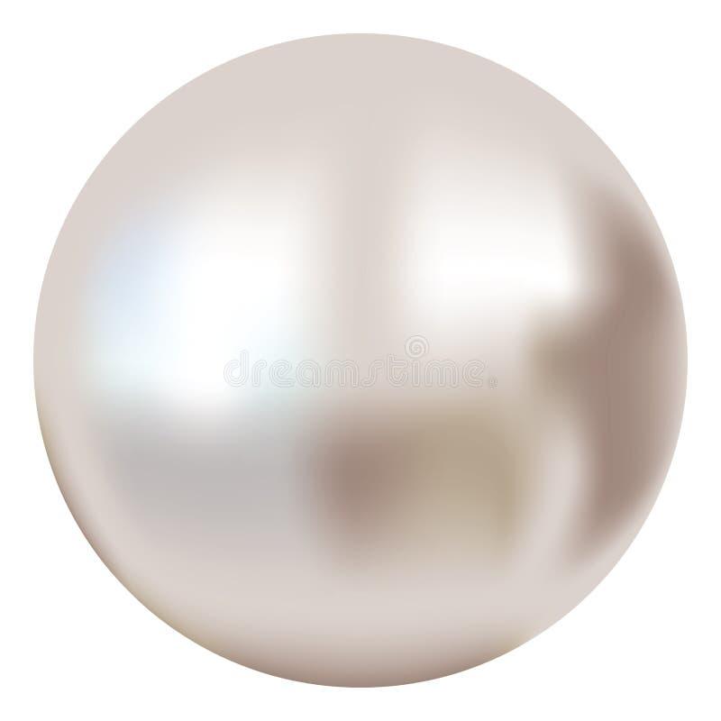 Κομψό άσπρο μαργαριτάρι διανυσματική απεικόνιση