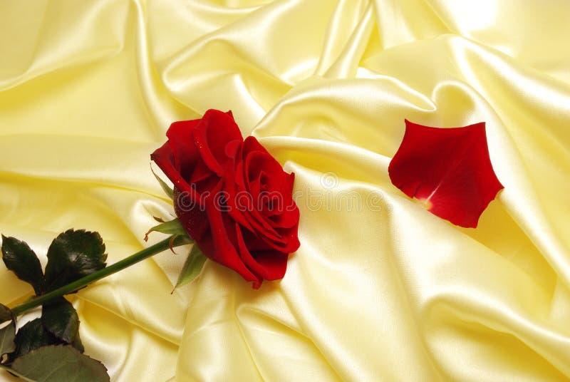 κομψό χρυσό σατέν μαλακό στοκ φωτογραφία