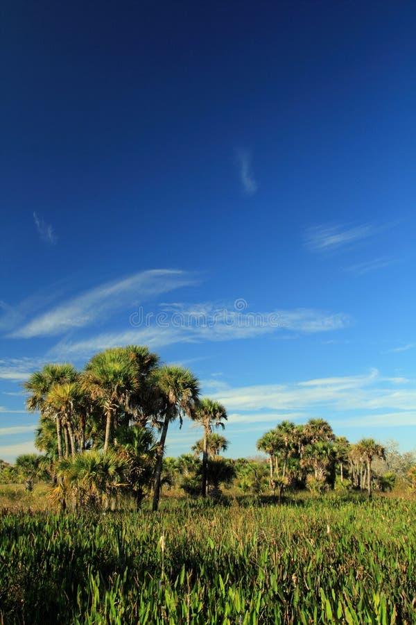 Κονσέρβα λιβαδιών Kissimmee στοκ εικόνα με δικαίωμα ελεύθερης χρήσης