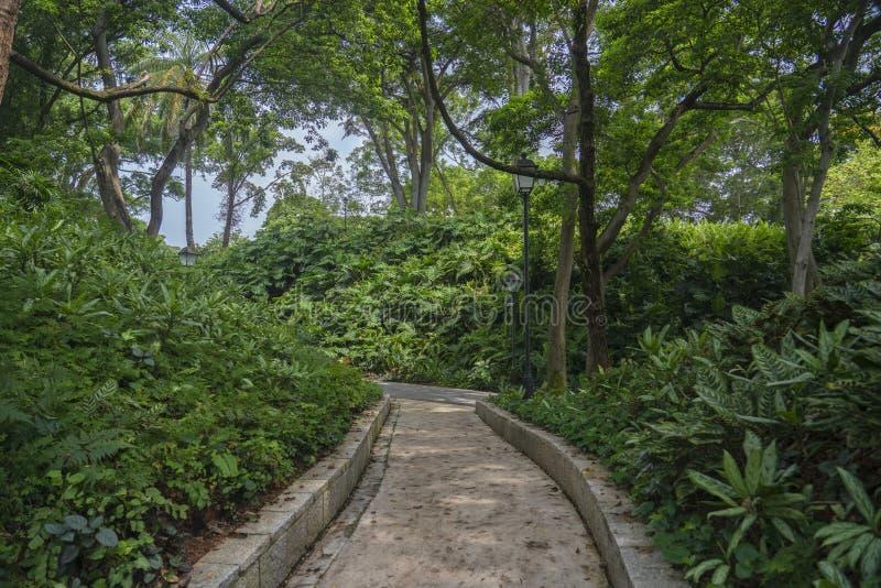 Κονσερβοποιώντας πορεία περπατήματος πάρκων οχυρών μεταξύ της βλάστησης στοκ εικόνες με δικαίωμα ελεύθερης χρήσης