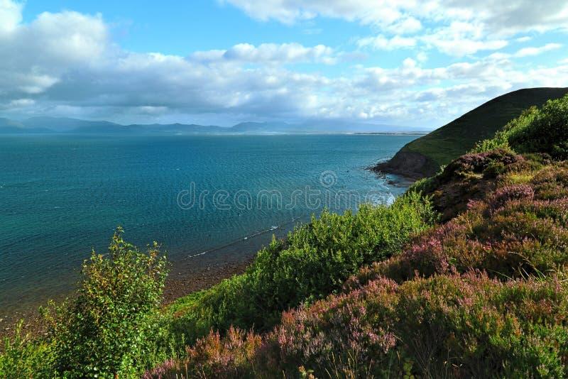 Κοντά στον ωκεανό - απότομοι βράχοι & φύση στην ακτή της Ιρλανδίας στοκ φωτογραφία με δικαίωμα ελεύθερης χρήσης