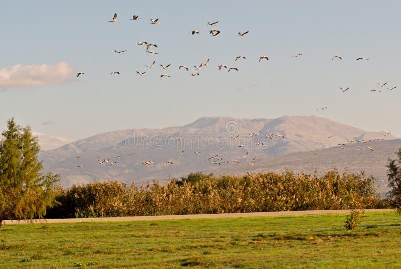 κοπάδι πουλιών στοκ εικόνες