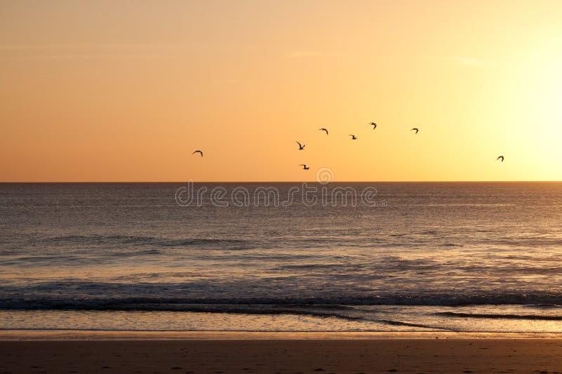 Κοπάδι των πουλιών που πετούν σε ένα ηλιοβασίλεμα στοκ φωτογραφία με δικαίωμα ελεύθερης χρήσης