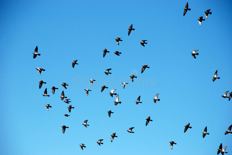 Κοπάδι των πουλιών σε έναν μπλε ουρανό στοκ εικόνες