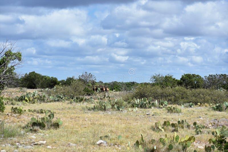 Κοπάδι Mouflon πάνω από ένα βουνό στοκ φωτογραφία με δικαίωμα ελεύθερης χρήσης