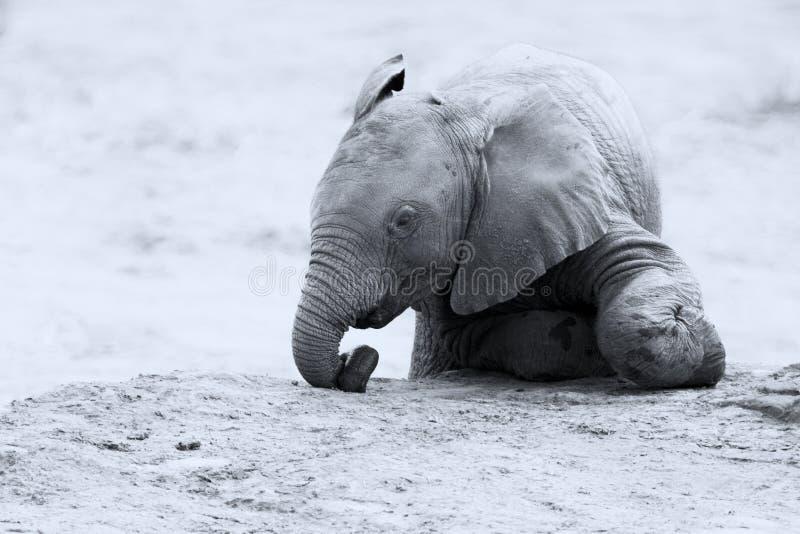 Κοπάδι αναπαραγωγής του πόσιμου νερού ελεφάντων σε μια μικρή λίμνη στοκ φωτογραφία