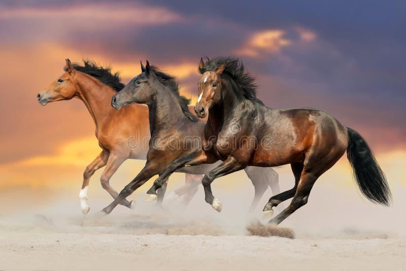 Κοπάδι αλόγων που οργανώνεται στην έρημο στοκ εικόνα με δικαίωμα ελεύθερης χρήσης