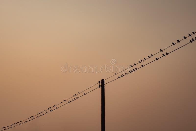 Κοπάδι του πουλιού πέρα από την ηλεκτρική γραμμή στοκ εικόνες με δικαίωμα ελεύθερης χρήσης