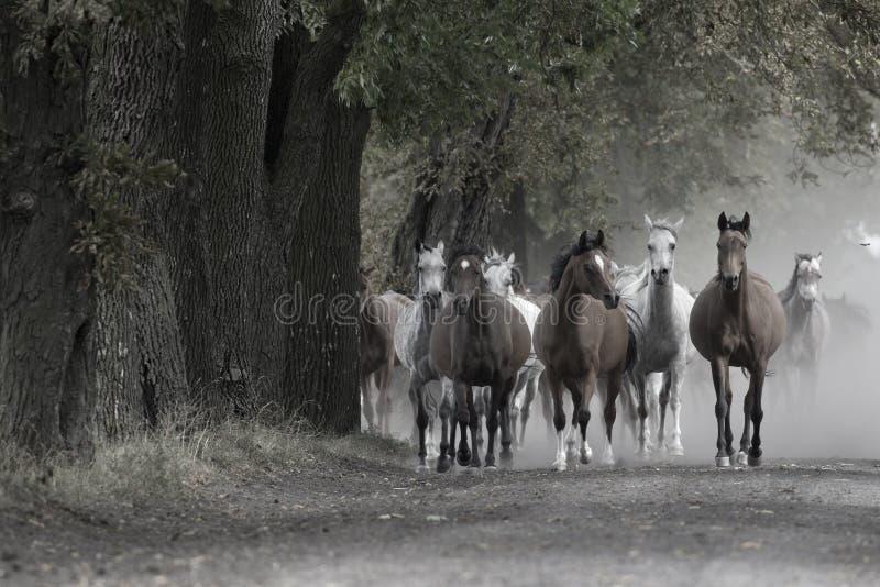 Κοπάδι των αλόγων στον του χωριού δρόμο στοκ φωτογραφίες με δικαίωμα ελεύθερης χρήσης