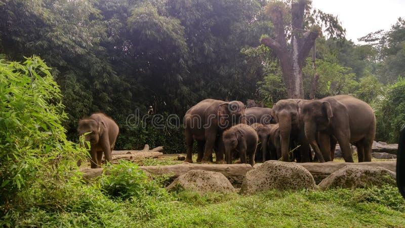 Κοπάδι φωτογραφιών των ελεφάντων στοκ εικόνα με δικαίωμα ελεύθερης χρήσης