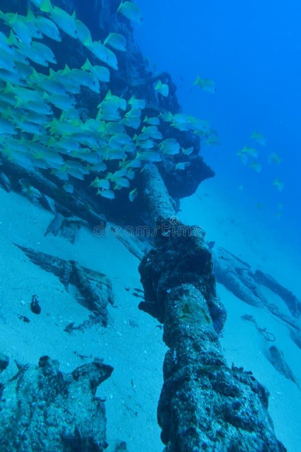 Κοπάδι ψαριών στα υποβρύχια συντρίμμια στοκ εικόνα