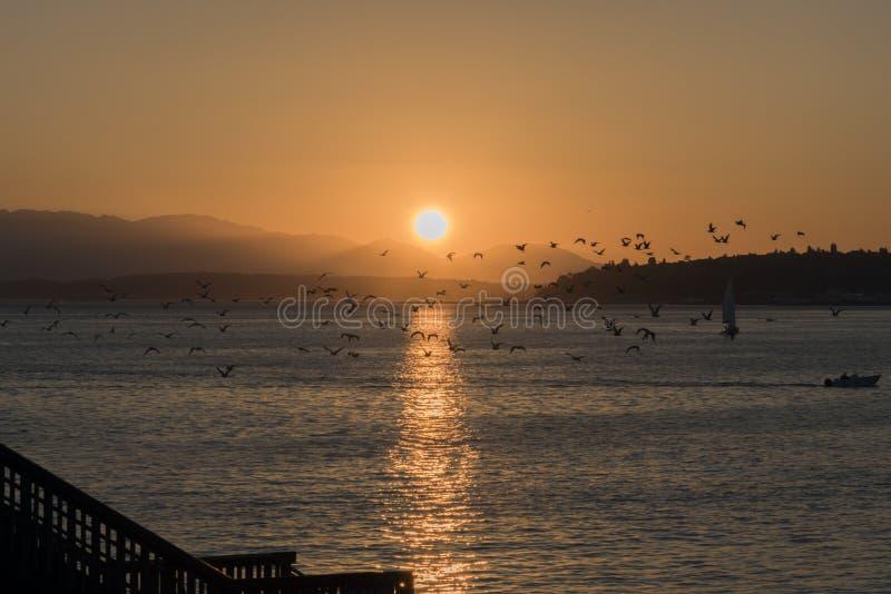 Κοπάδι seagulls πέρα από τη θάλασσα στο ηλιοβασίλεμα στοκ εικόνες