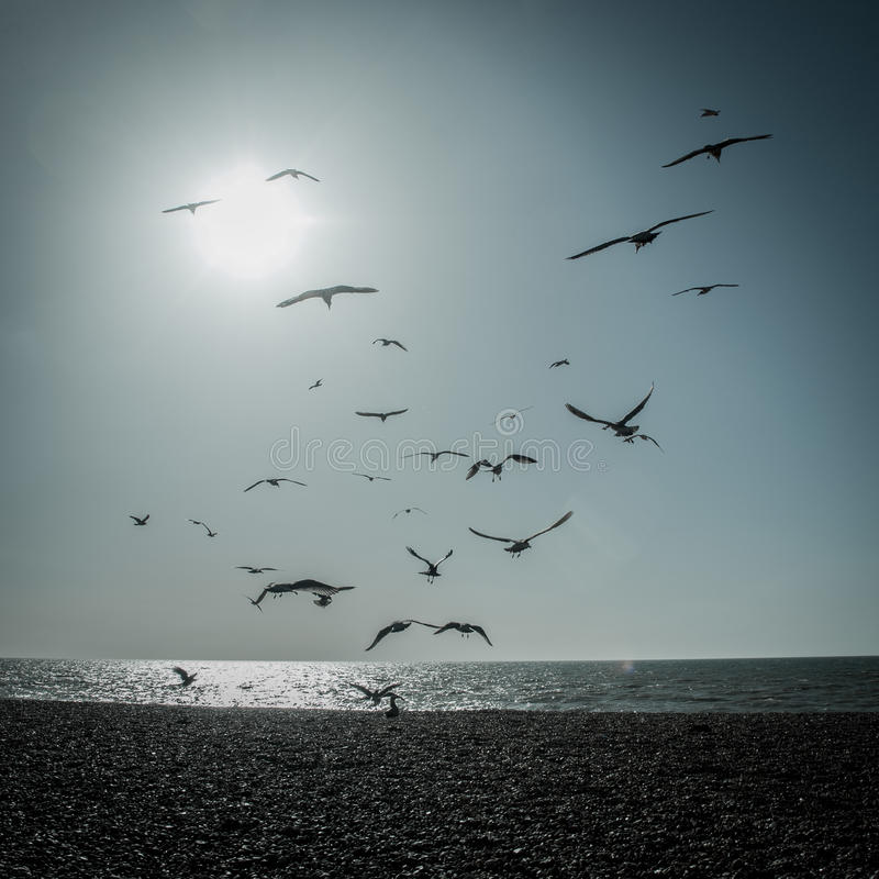 Κοπάδι Seagulls στοκ φωτογραφία