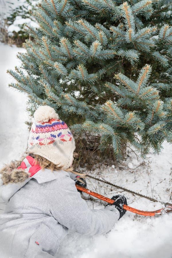 Κοπή χριστουγεννιάτικων δέντρων στοκ εικόνα