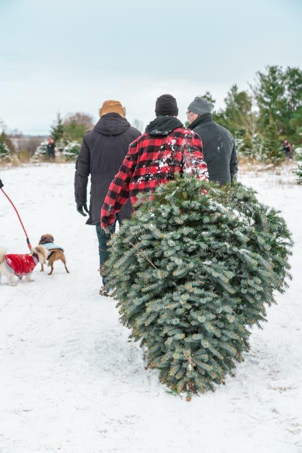 Κοπή χριστουγεννιάτικων δέντρων στοκ εικόνες