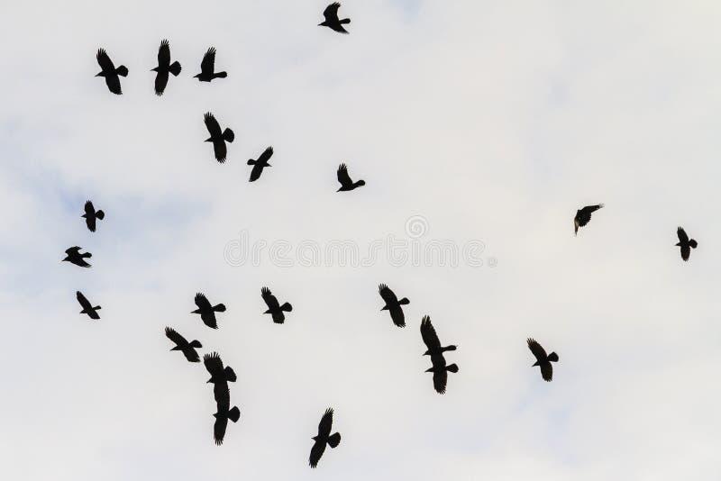 Κοράκια που πετούν μέσω του νεφελώδους ουρανού στοκ φωτογραφία