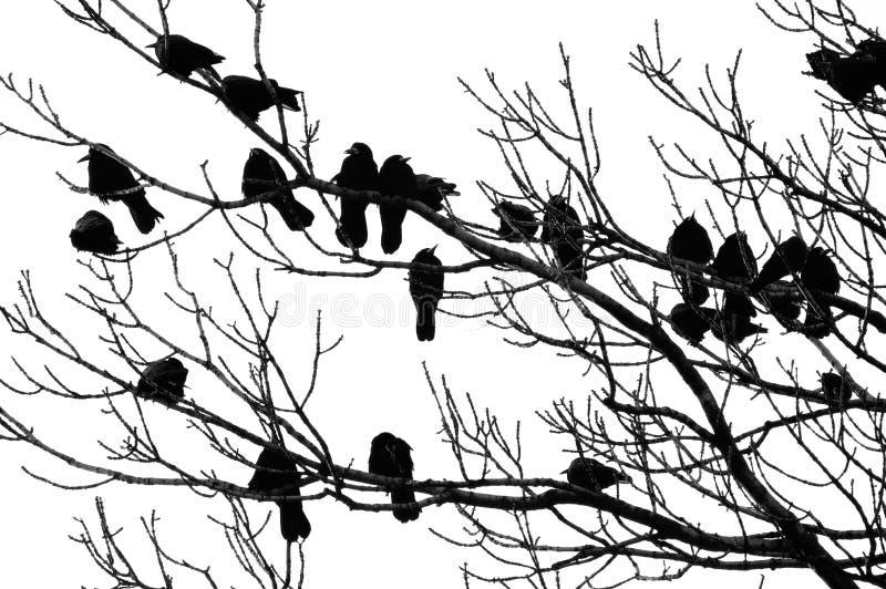κοράκια Στοκ Φωτογραφία