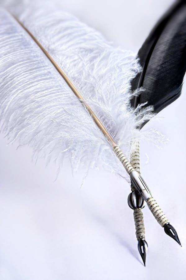 κοράκι στρουθοκαμήλων στοκ φωτογραφία με δικαίωμα ελεύθερης χρήσης