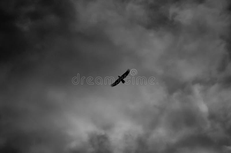 κοράκι στοκ φωτογραφίες με δικαίωμα ελεύθερης χρήσης