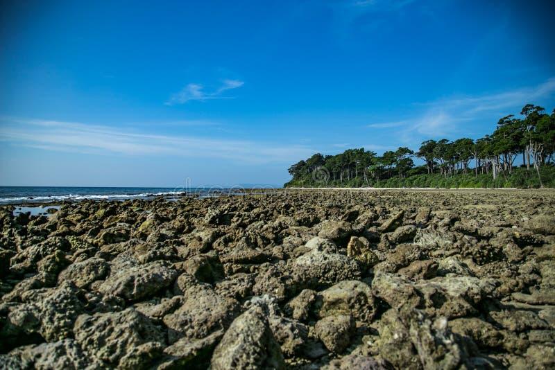 Κοράλλια σε Andaman στοκ φωτογραφία