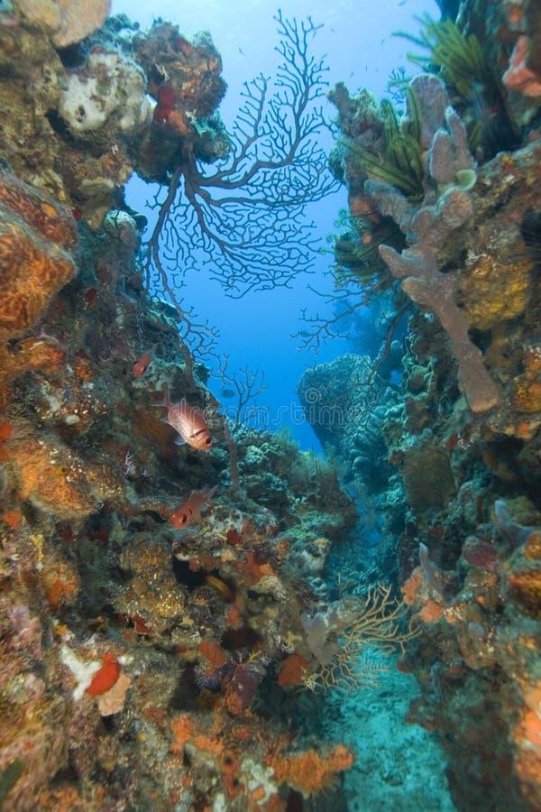 κοράλλι Λουκία ST Στοκ φωτογραφία με δικαίωμα ελεύθερης χρήσης