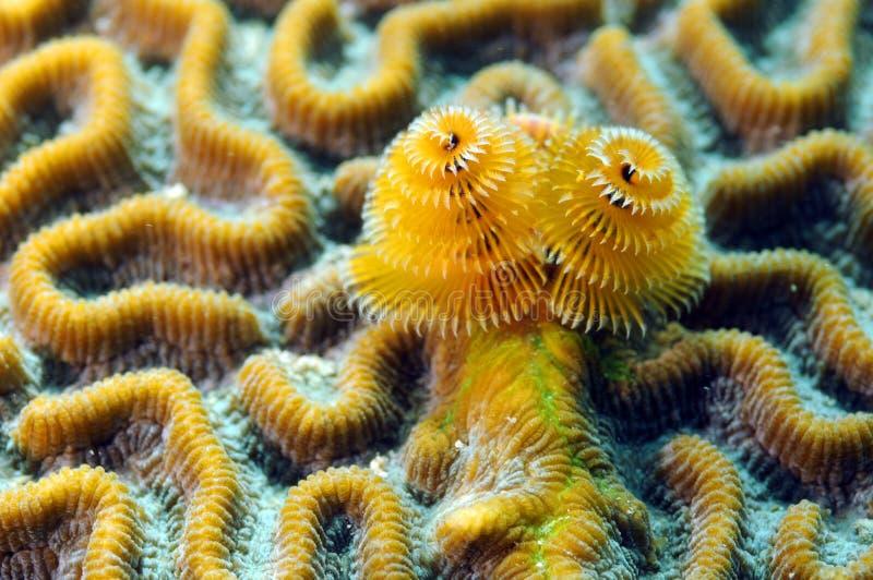 κοράλλι μαλακό στοκ εικόνα
