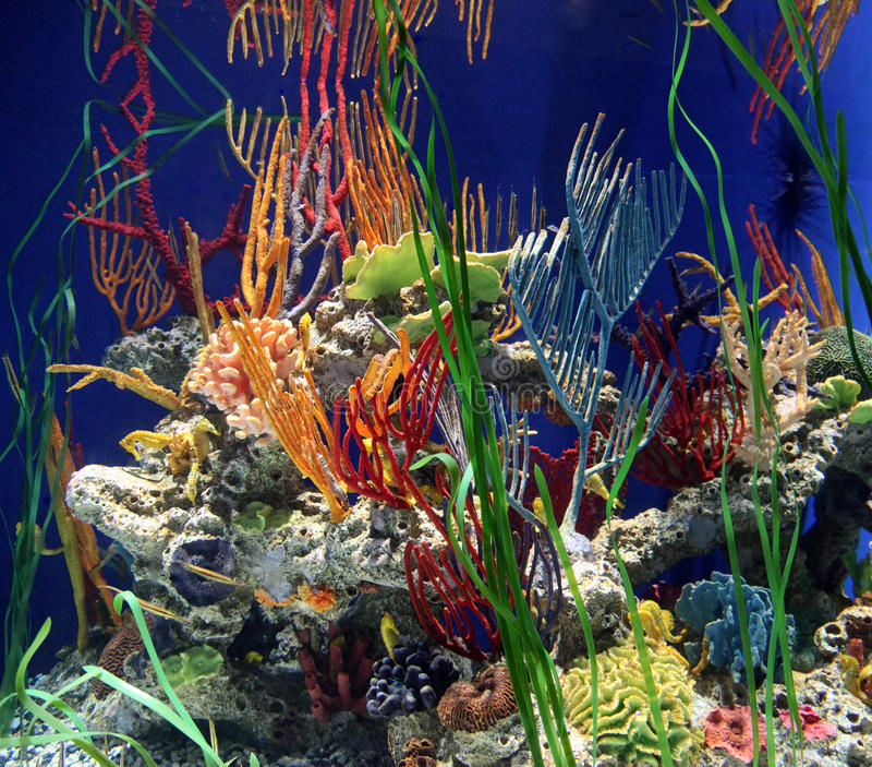 κοράλλι seahorse στοκ εικόνα με δικαίωμα ελεύθερης χρήσης
