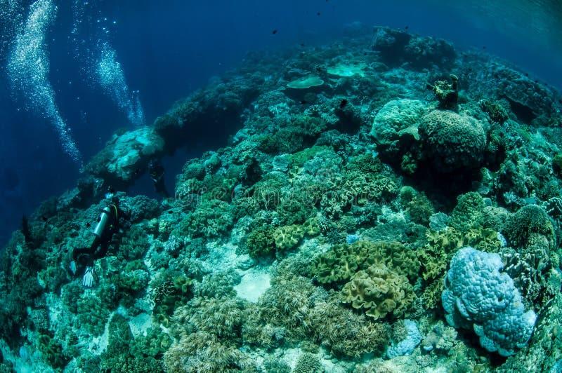 Κοράλλια δέρματος δυτών και μανιταριών σε Banda, υποβρύχια φωτογραφία της Ινδονησίας στοκ εικόνα με δικαίωμα ελεύθερης χρήσης