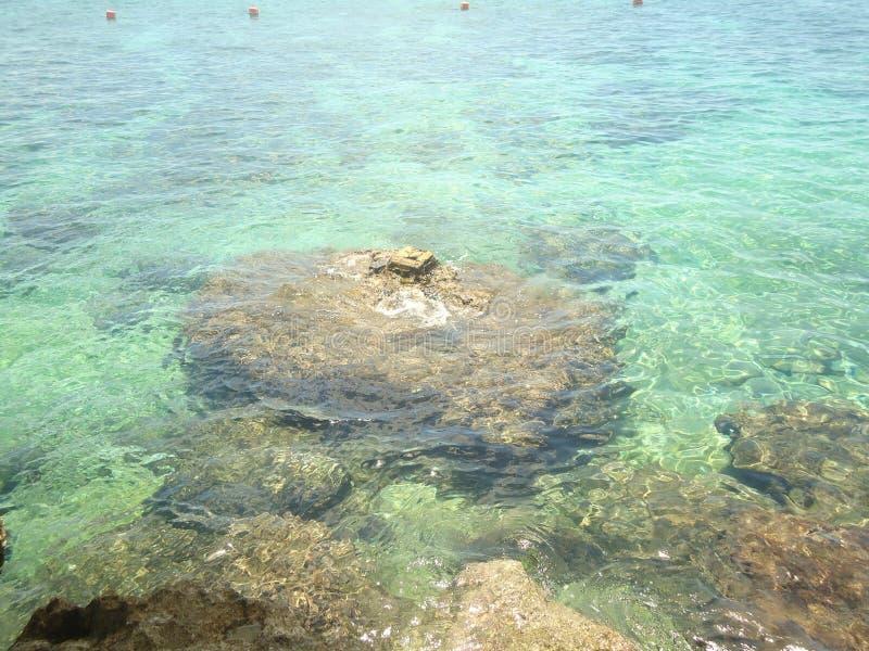Κοράλλι βράχου στοκ φωτογραφία με δικαίωμα ελεύθερης χρήσης
