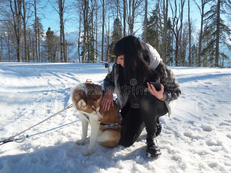 Κορίτσι και γεροδεμένο σκυλί στο χιόνι στα βουνά στοκ φωτογραφία