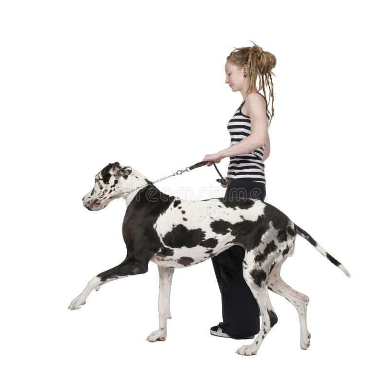 κορίτσι μεγάλο εκτάριο σκυλιών 4 Δανών οι περπατώντας νεολαίες ετών του στοκ εικόνα με δικαίωμα ελεύθερης χρήσης