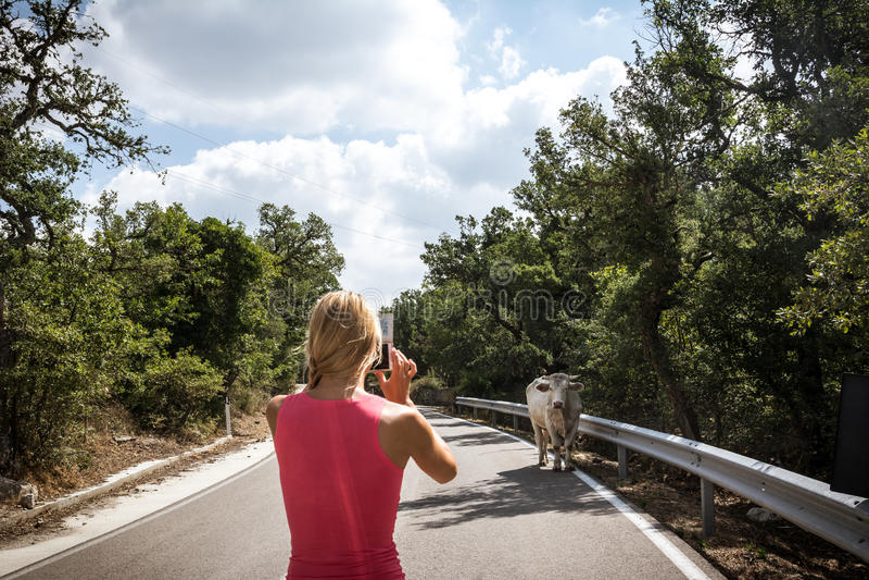 Κορίτσι που παίρνει τη φωτογραφία του άσπρου ταύρου στην οδό στοκ εικόνα με δικαίωμα ελεύθερης χρήσης