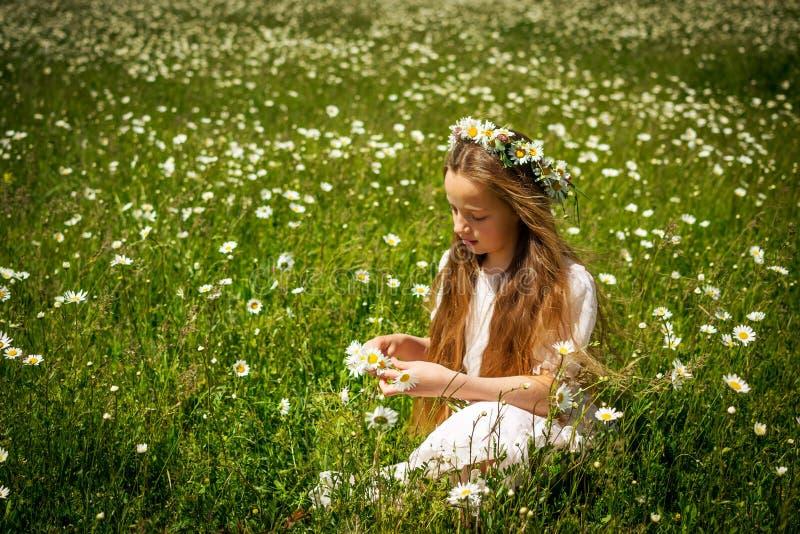 Κορίτσι που πλέκει ένα στεφάνι των chamomiles σε έναν τομέα chamomile στοκ εικόνες με δικαίωμα ελεύθερης χρήσης
