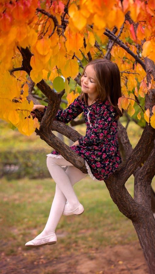 Κορίτσι στα όνειρα φθινοπώρου δέντρων στοκ εικόνα