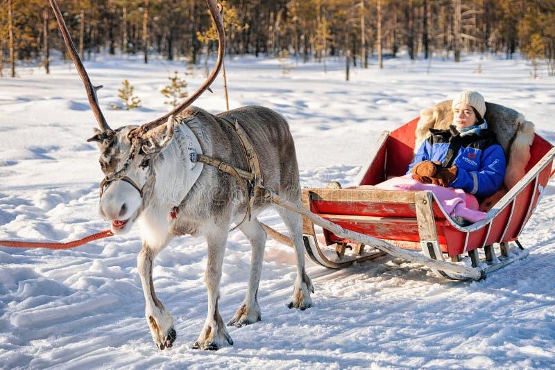 Κορίτσι στο έλκηθρο ταράνδων το χειμώνα Ροβανιέμι φινλανδικό Lapland στοκ εικόνες