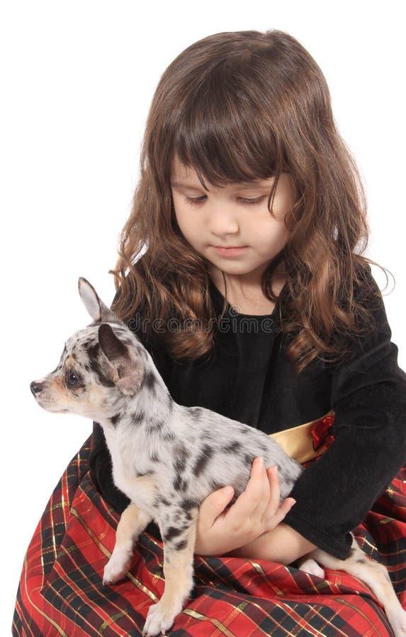 κορίτσι chihuahua λίγα στοκ φωτογραφία