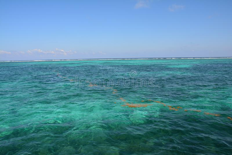 Κοραλλιογενής ύφαλος στο νησί Μπελίζ καλαφατών Caye στοκ φωτογραφία με δικαίωμα ελεύθερης χρήσης