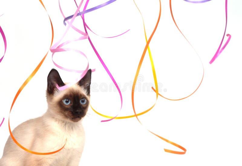 κορδέλλες γατακιών σια&m στοκ εικόνα με δικαίωμα ελεύθερης χρήσης