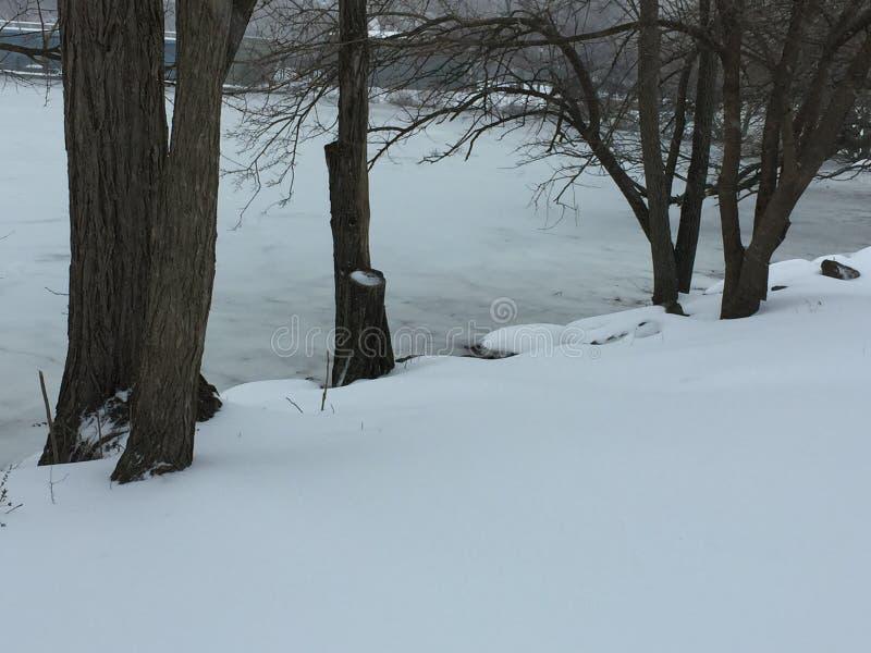 Κορμοί δέντρων από την παγωμένη ακτή στοκ φωτογραφίες