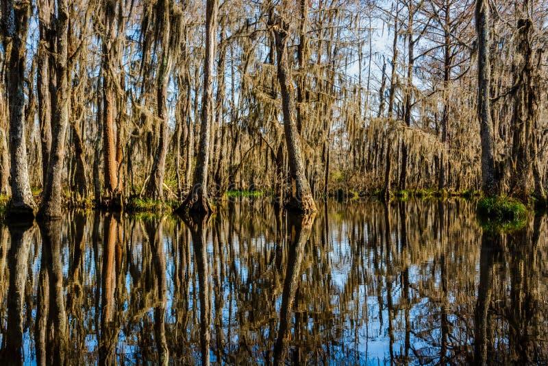 Κορμοί δέντρων κυπαρισσιών και οι αντανακλάσεις νερού τους στα έλη κοντά στη Νέα Ορλεάνη, Λουιζιάνα κατά τη διάρκεια της εποχής φ στοκ φωτογραφία
