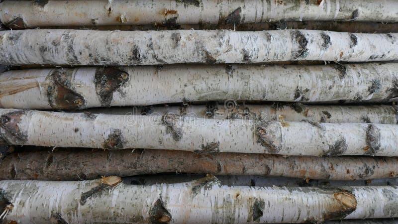 Κορμοί σημύδων για το καυσόξυλο, την ξυλεία οικοδόμησης ή τη διακόσμηση Betula Papyrifera φυσικό δάσος ανασκόπηση&sigmaf στοκ εικόνες με δικαίωμα ελεύθερης χρήσης
